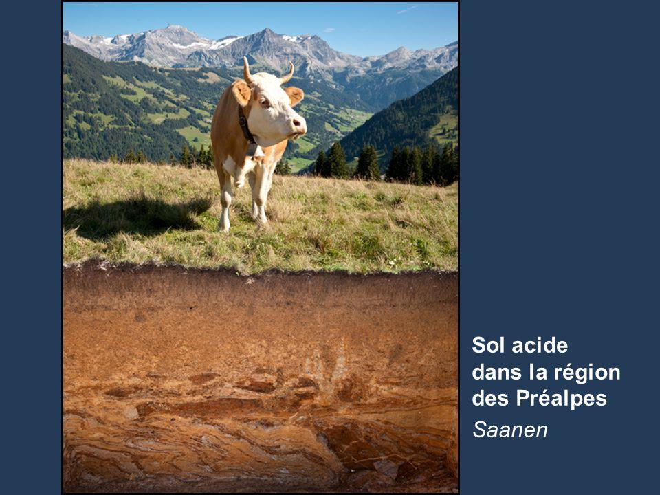 28 Name der Präsentation | Untertitel Autor Sol acide dans la région des Préalpes Saanen
