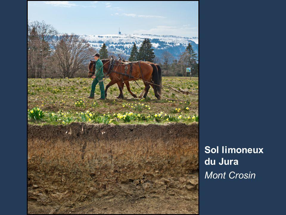 5 Name der Präsentation | Untertitel Autor ProfondeurDescription 0 à 20 cmCouche supérieure brun foncé de silt limoneux avec 5% d'humus.
