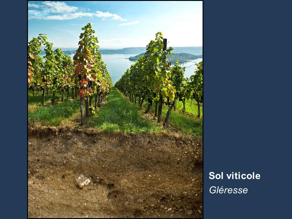 7 Name der Präsentation | Untertitel Autor Sol viticole Gléresse