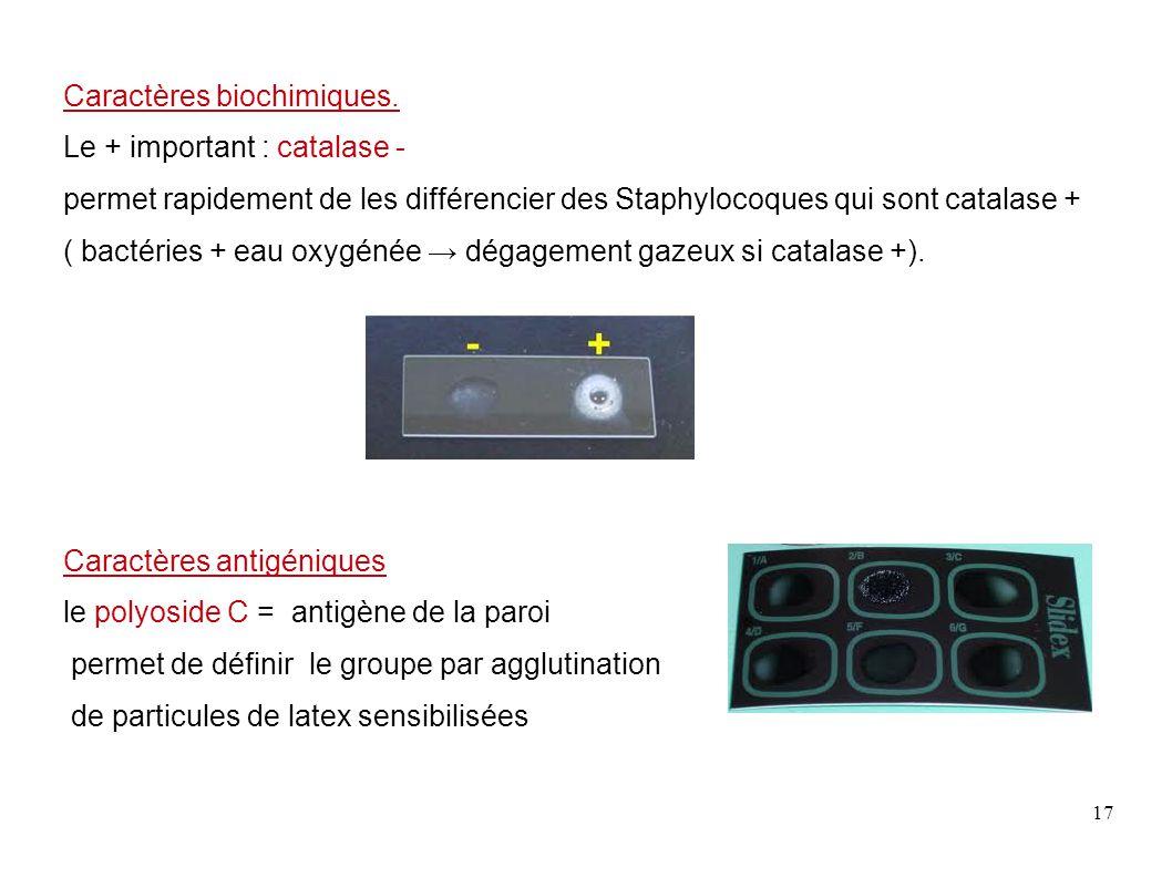 17 Caractères biochimiques. Le + important : catalase - permet rapidement de les différencier des Staphylocoques qui sont catalase + ( bactéries + eau