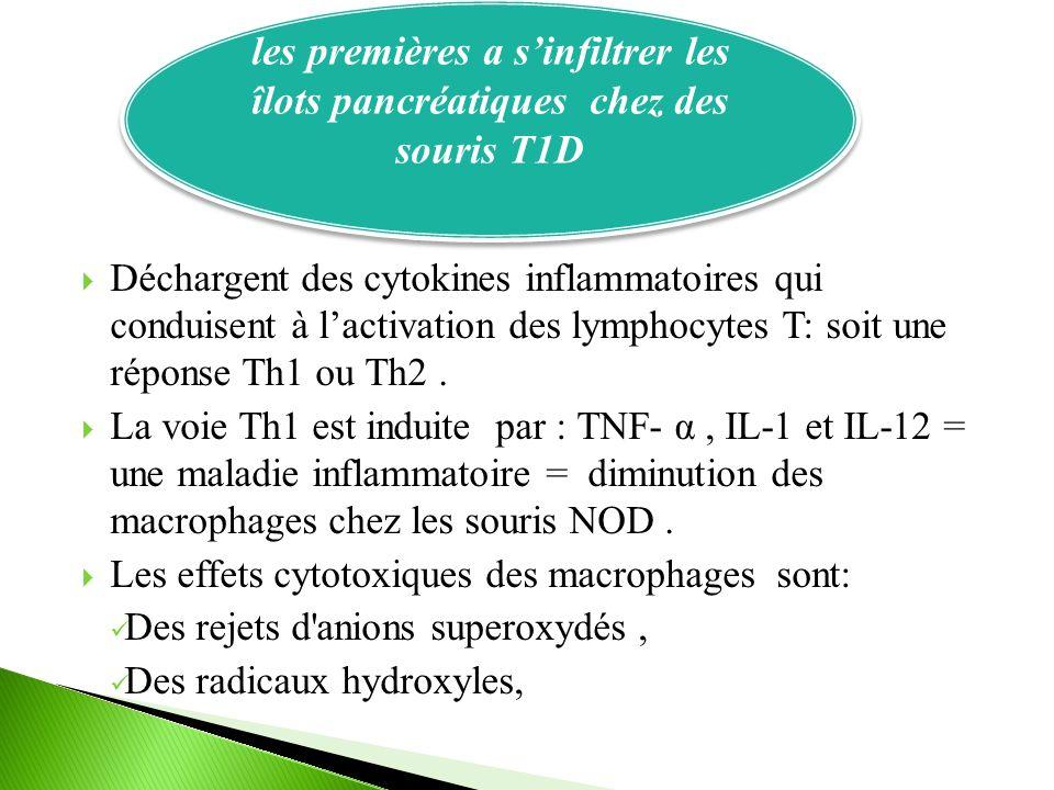  Déchargent des cytokines inflammatoires qui conduisent à l'activation des lymphocytes T: soit une réponse Th1 ou Th2.  La voie Th1 est induite par