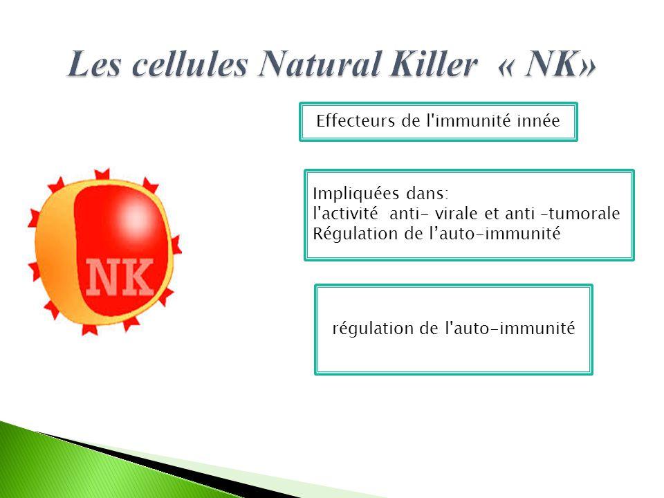 Effecteurs de l immunité innée Impliquées dans: l activité anti- virale et anti –tumorale Régulation de l'auto-immunité régulation de l auto-immunité