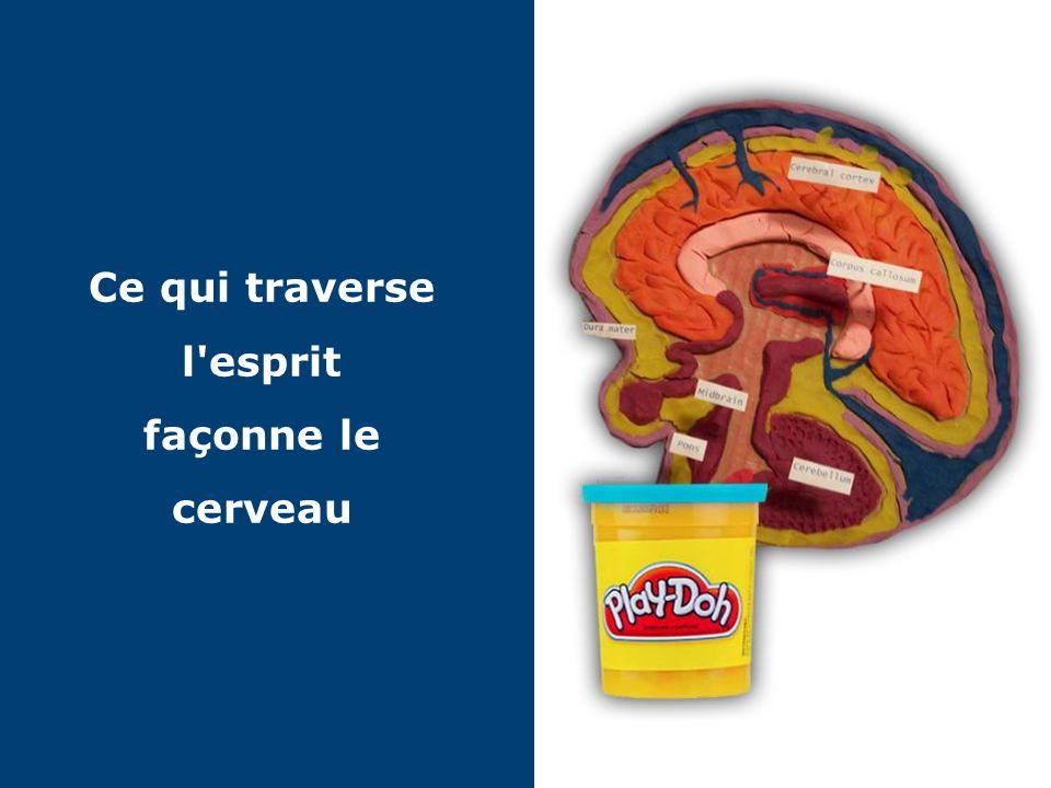 © 2013 Painchaud Performance Group 9 Plasticité synaptique = sciences du cerveau et Rendement humain
