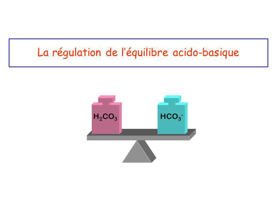 La régulation de l'équilibre acido-basique H 2 CO 3 HCO 3 -