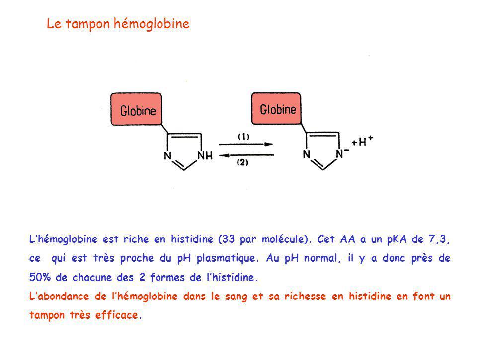 Le tampon hémoglobine L'hémoglobine est riche en histidine (33 par molécule).