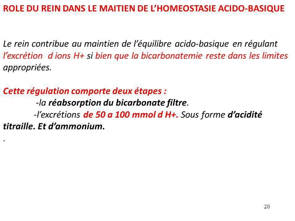 20 ROLE DU REIN DANS LE MAITIEN DE L'HOMEOSTASIE ACIDO-BASIQUE Le rein contribue au maintien de l'équilibre acido-basique en régulant l'excrétion d ions H+ si bien que la bicarbonatemie reste dans les limites appropriées.