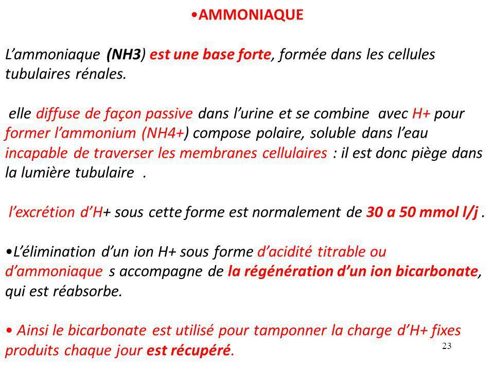 23 AMMONIAQUE L'ammoniaque (NH3) est une base forte, formée dans les cellules tubulaires rénales.