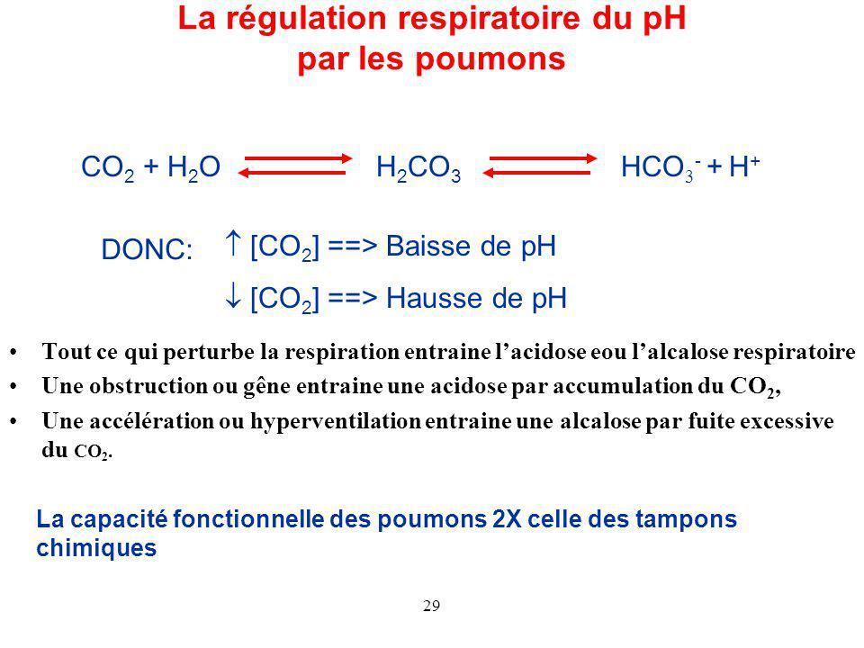 29 La régulation respiratoire du pH par les poumons CO 2 + H 2 OH 2 CO 3 HCO 3 - + H + DONC:  [CO 2 ] ==> Baisse de pH  [CO 2 ] ==> Hausse de pH Tout ce qui perturbe la respiration entraine l'acidose eou l'alcalose respiratoire Une obstruction ou gêne entraine une acidose par accumulation du CO 2, Une accélération ou hyperventilation entraine une alcalose par fuite excessive du CO 2.