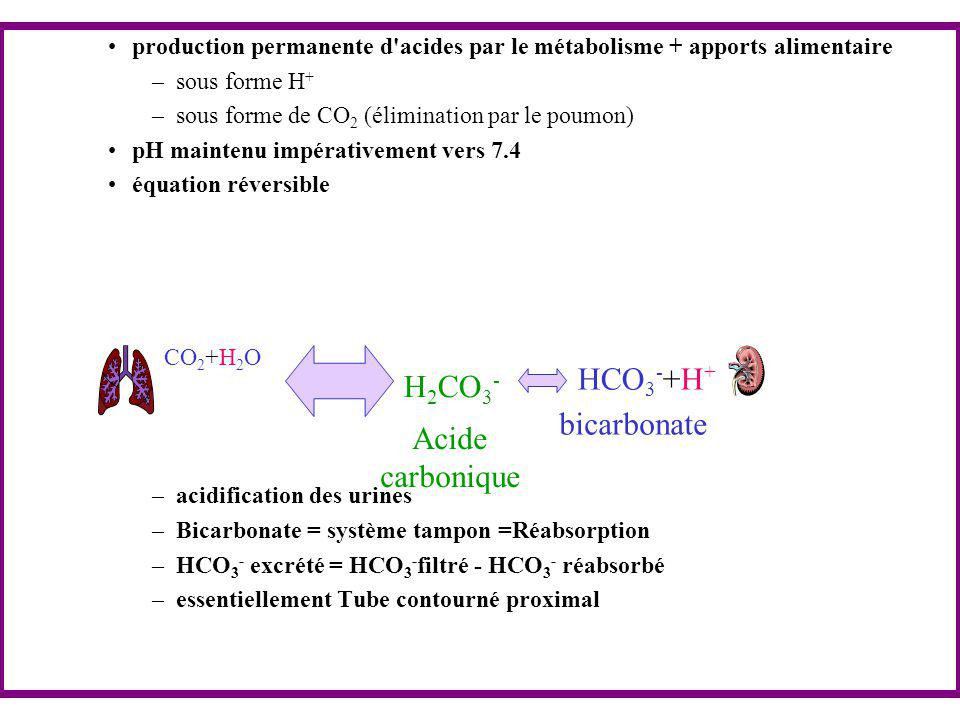 production permanente d'acides par le métabolisme + apports alimentaire –sous forme H + –sous forme de CO 2 (élimination par le poumon) pH maintenu im