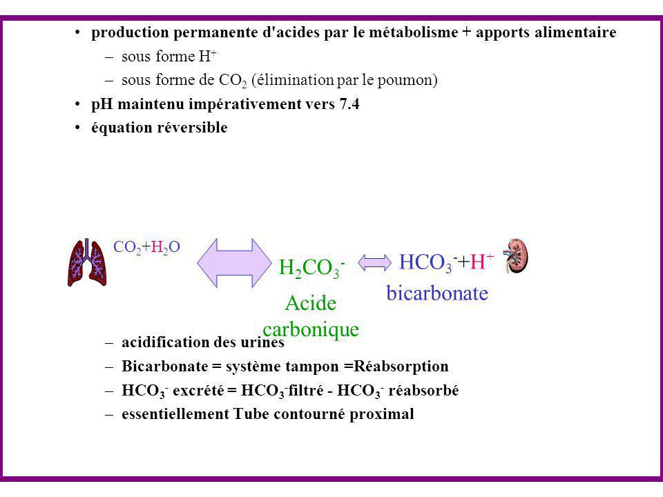 La régulation ventilatoire du pH plasmatique La régulation de l'excrétion du CO2 est très efficace.