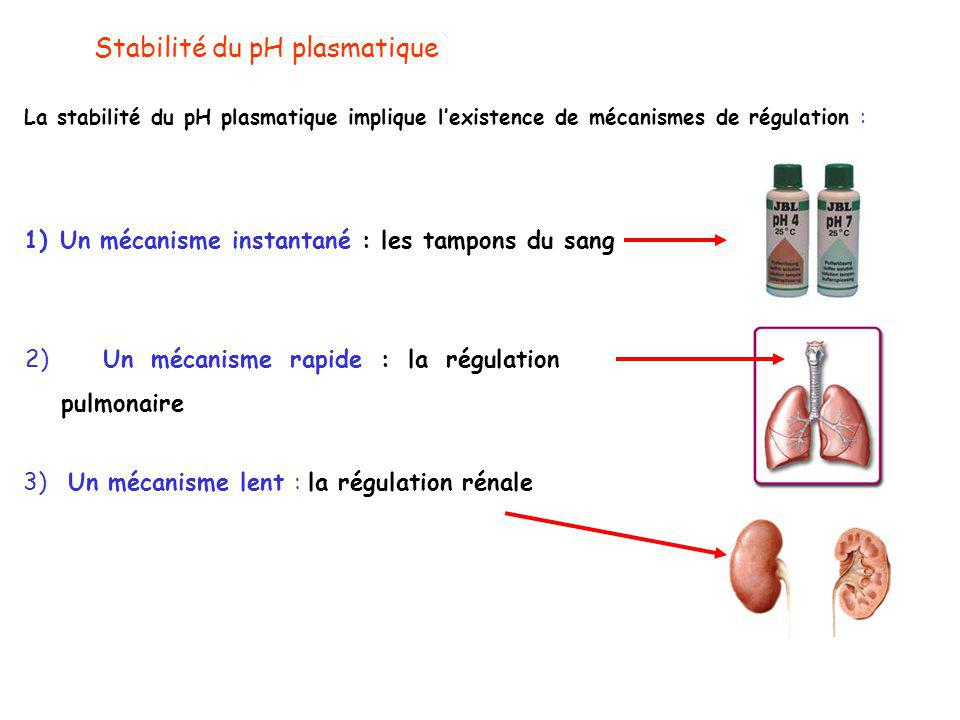 La stabilité du pH plasmatique implique l'existence de mécanismes de régulation : Stabilité du pH plasmatique 1)Un mécanisme instantané : les tampons du sang 2) Un mécanisme rapide : la régulation pulmonaire 3) Un mécanisme lent : la régulation rénale