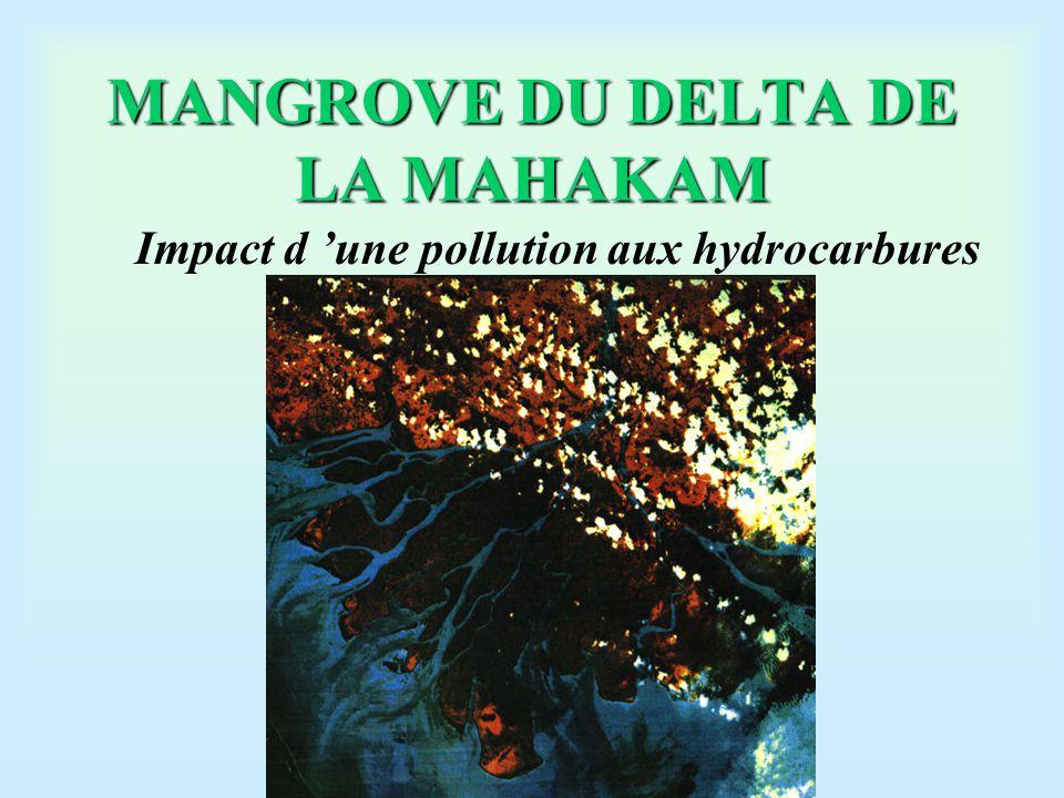 La mangrove: un milieu très hétérogène Zone apicale: eau douce Zone médiane: eau saumâtre Zone d 'embouchure: eau salée Zone centrale: sans lien avec les canaux distributeurs