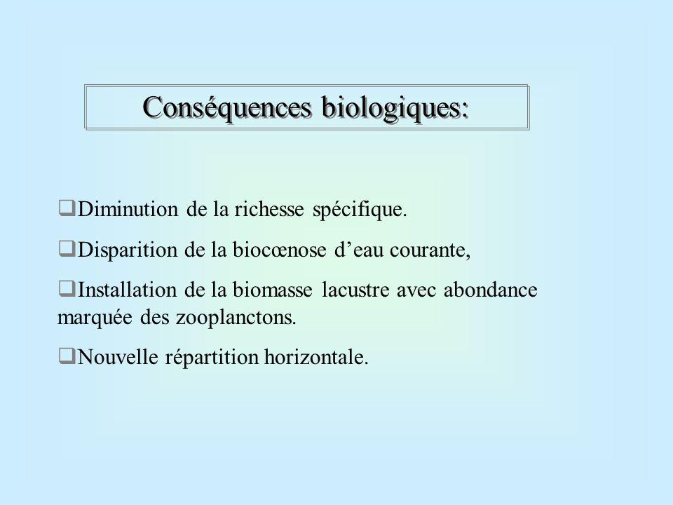 Système lacustre perturbé:  A fortes crues: consommation d'oxygène de l'épilimnion.
