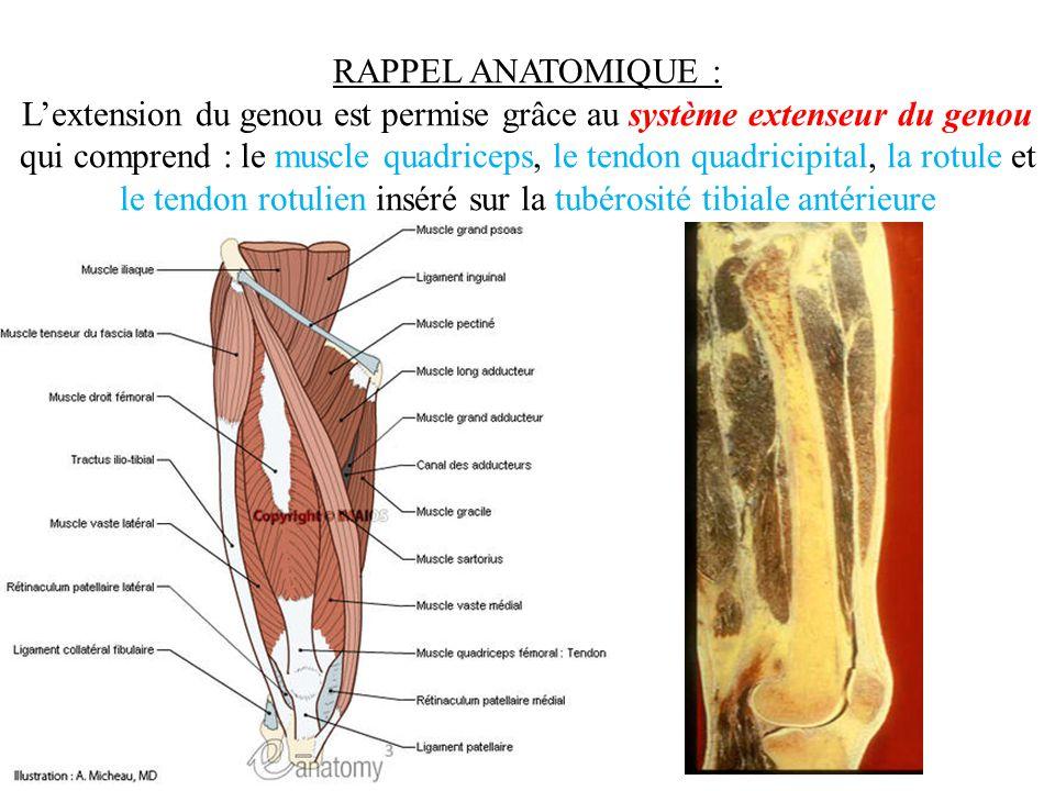 RAPPEL ANATOMIQUE : L'extension du genou est permise grâce au système extenseur du genou qui comprend : le muscle quadriceps, le tendon quadricipital,