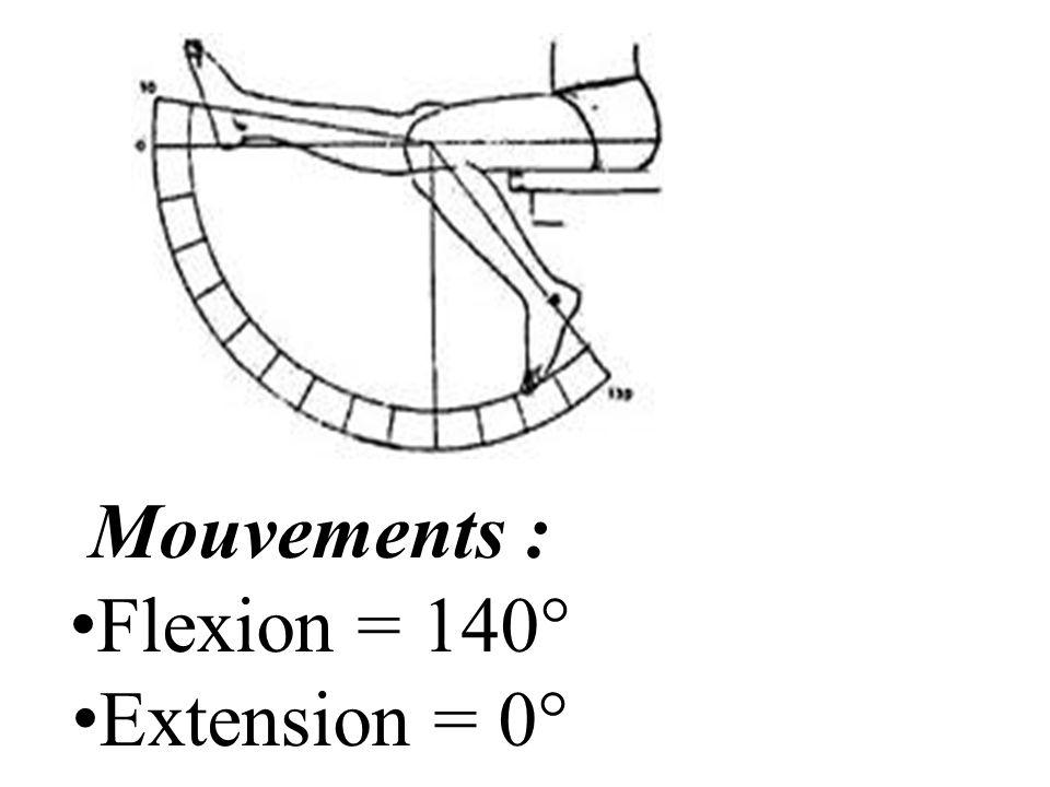 Mouvements : Flexion = 140° Extension = 0°