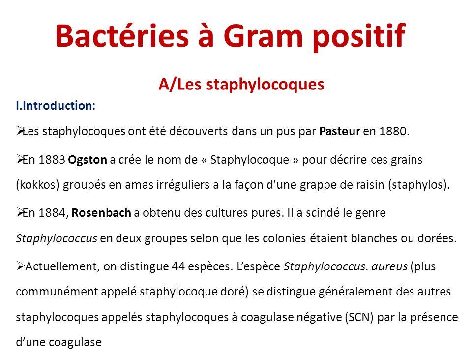 Bactéries à Gram positif A/Les staphylocoques I.Introduction:  Les staphylocoques ont été découverts dans un pus par Pasteur en 1880.  En 1883 Ogsto