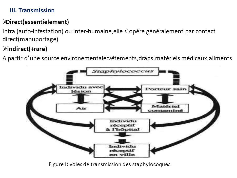 III. Transmission  Direct(essentielement) Intra (auto-infestation) ou inter-humaine,elle s´opére généralement par contact direct(manuportage)  indir