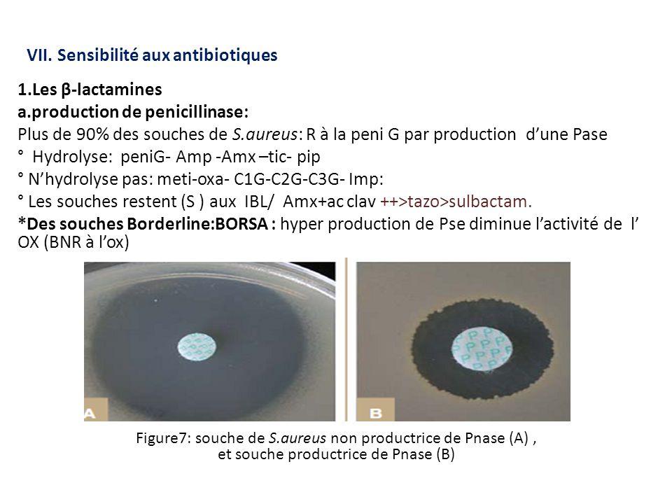 VII. Sensibilité aux antibiotiques 1.Les β-lactamines a.production de penicillinase: Plus de 90% des souches de S.aureus: R à la peni G par production