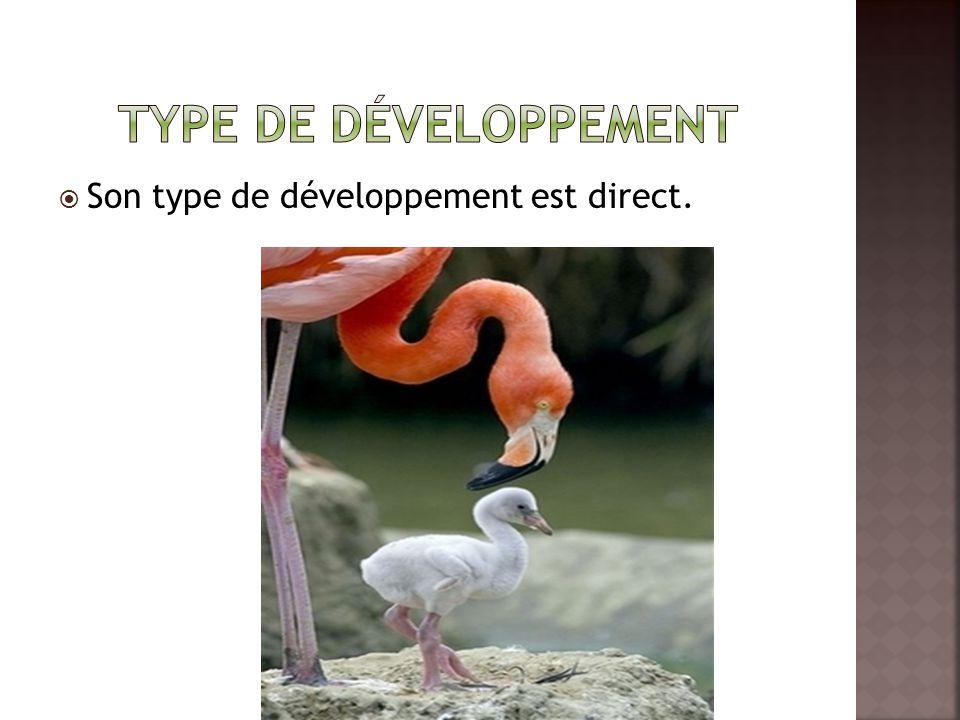  Son type de développement est direct.