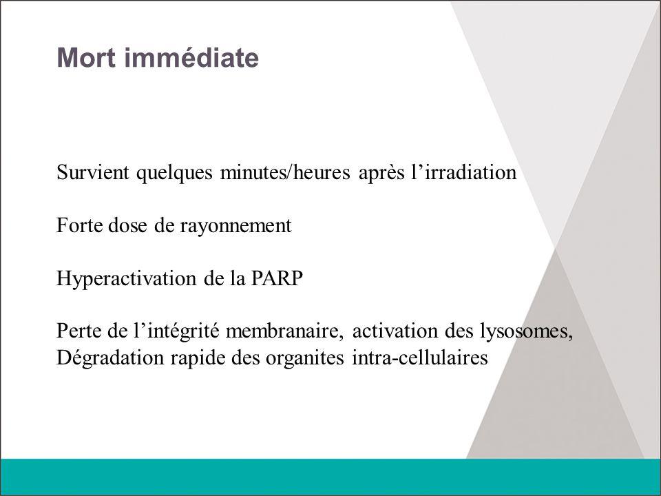Mort immédiate Survient quelques minutes/heures après l'irradiation Forte dose de rayonnement Hyperactivation de la PARP Perte de l'intégrité membrana