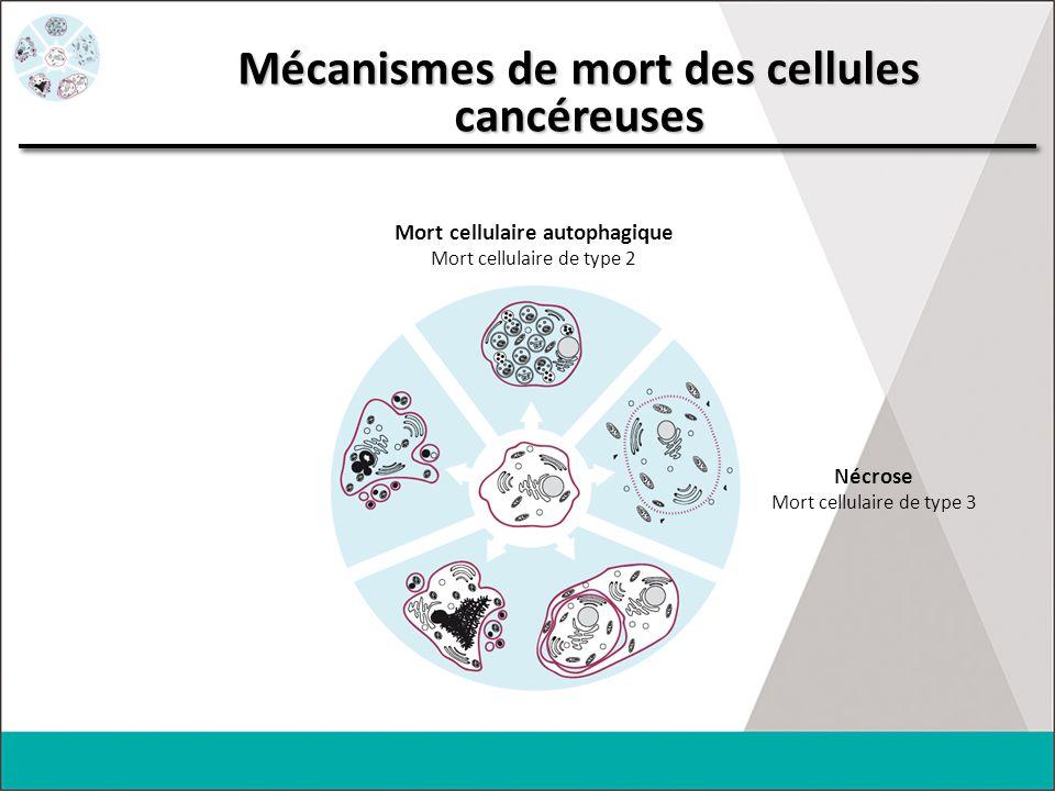 Mécanismes de mort des cellules cancéreuses Mort cellulaire autophagique Mort cellulaire de type 2 Nécrose Mort cellulaire de type 3