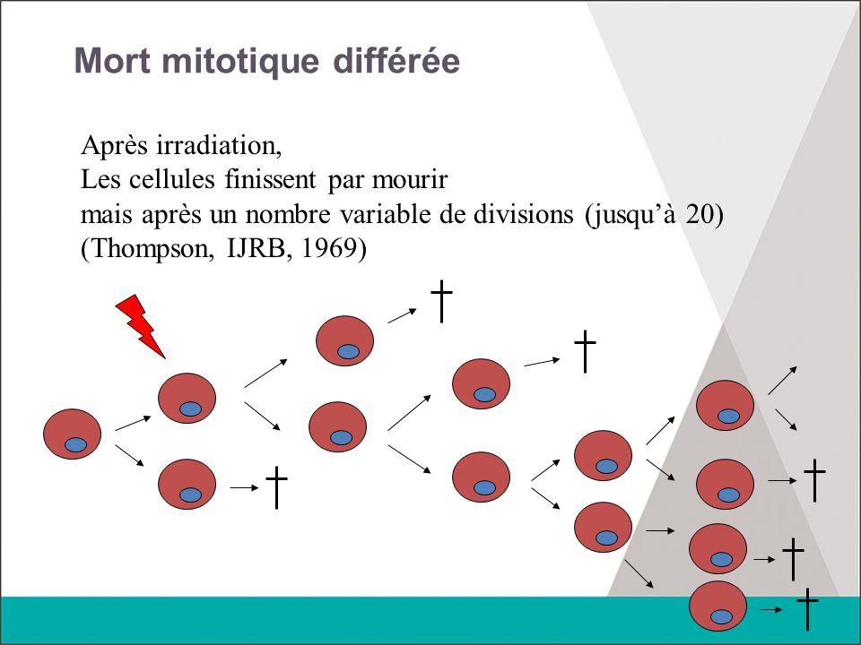 Mort mitotique différée Après irradiation, Les cellules finissent par mourir mais après un nombre variable de divisions (jusqu'à 20) (Thompson, IJRB,