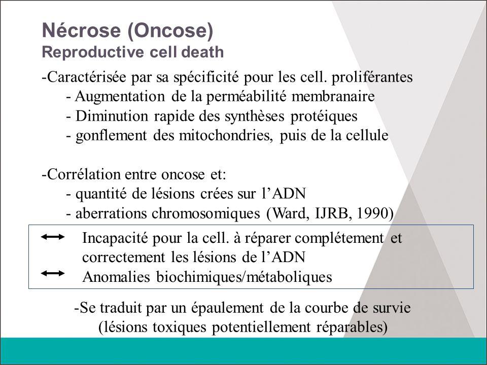 Nécrose (Oncose) Reproductive cell death -Caractérisée par sa spécificité pour les cell. proliférantes - Augmentation de la perméabilité membranaire -