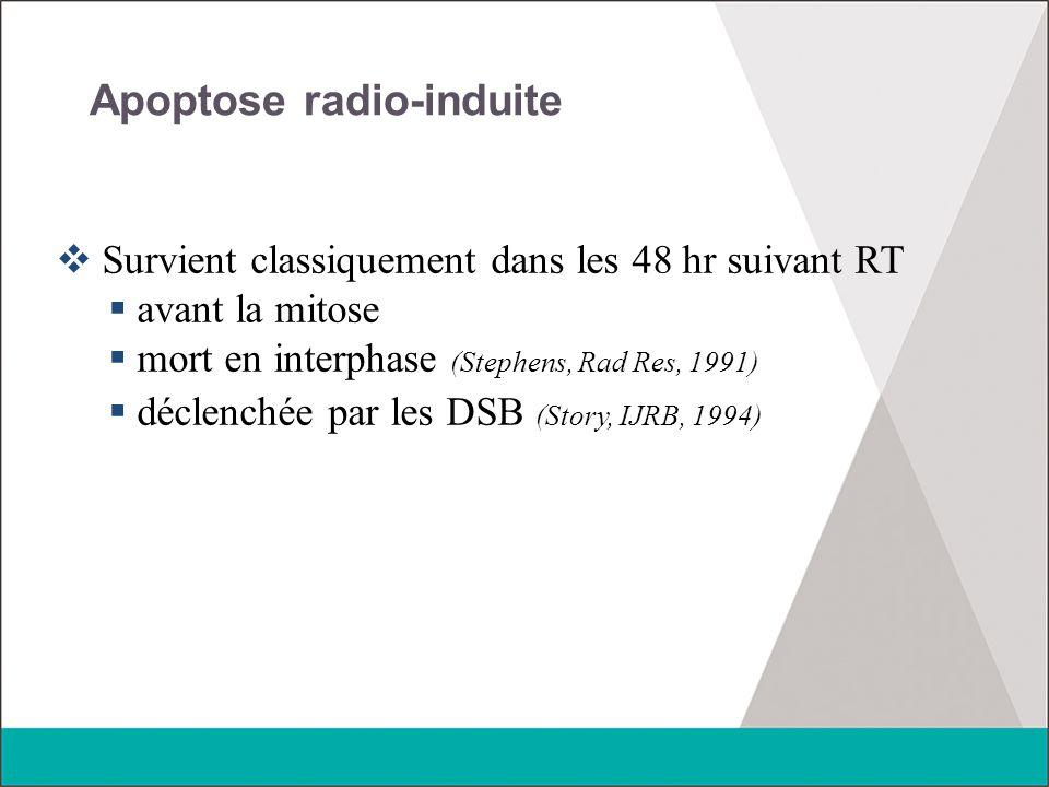 Apoptose radio-induite  Survient classiquement dans les 48 hr suivant RT  avant la mitose  mort en interphase (Stephens, Rad Res, 1991)  déclenché