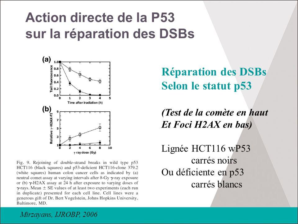 Action directe de la P53 sur la réparation des DSBs Réparation des DSBs Selon le statut p53 (Test de la comète en haut Et Foci H2AX en bas) Lignée HCT