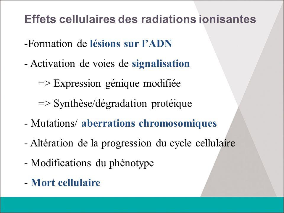 Effets cellulaires des radiations ionisantes -Formation de lésions sur l'ADN - Activation de voies de signalisation => Expression génique modifiée =>