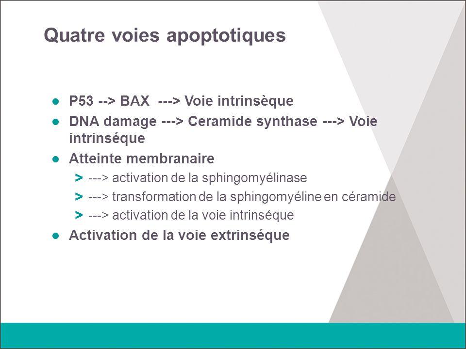Quatre voies apoptotiques P53 --> BAX ---> Voie intrinsèque DNA damage ---> Ceramide synthase ---> Voie intrinséque Atteinte membranaire > ---> activa