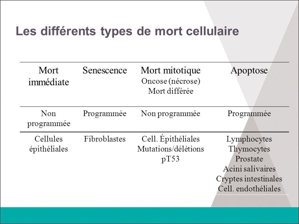 Les différents types de mort cellulaire Mort immédiate SenescenceMort mitotique Oncose (nécrose) Mort différée Apoptose Non programmée ProgramméeNon p