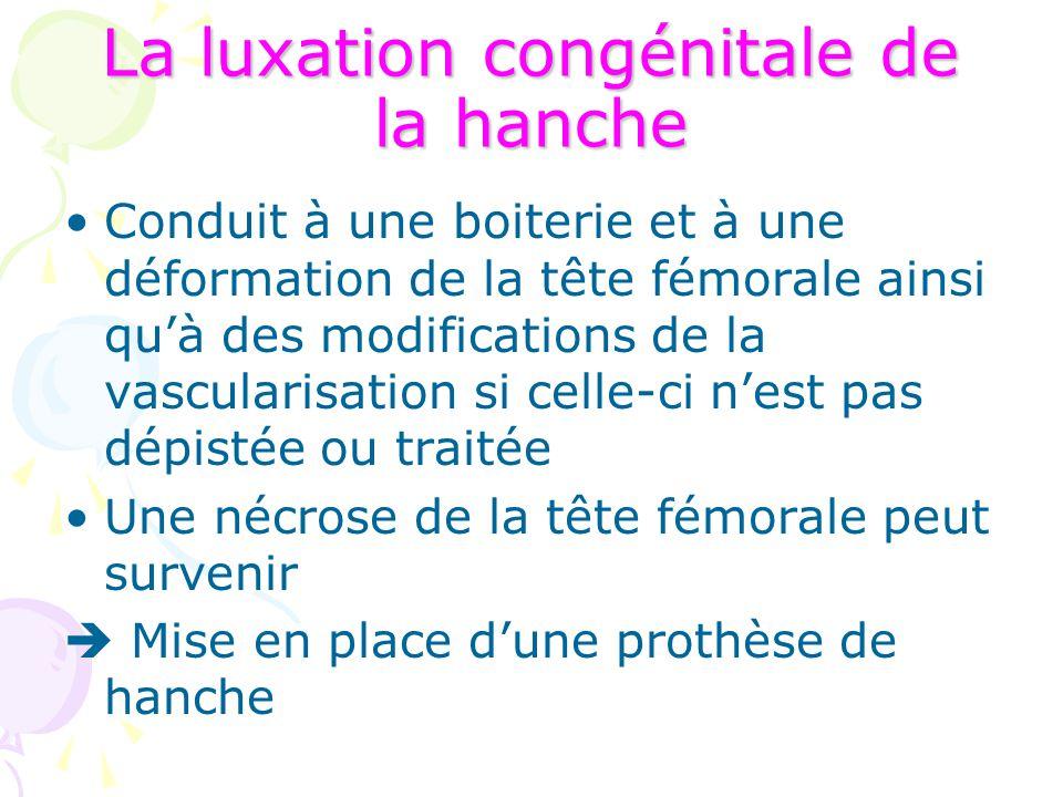 La luxation congénitale de la hanche Conduit à une boiterie et à une déformation de la tête fémorale ainsi qu'à des modifications de la vascularisatio