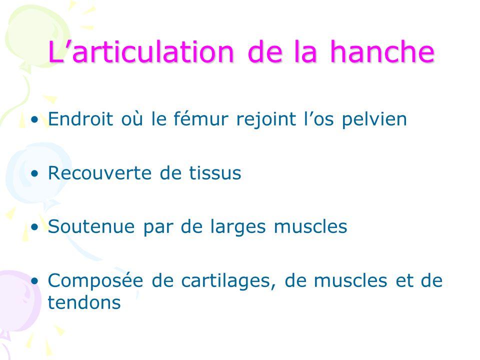 L'articulation de la hanche Endroit où le fémur rejoint l'os pelvien Recouverte de tissus Soutenue par de larges muscles Composée de cartilages, de mu