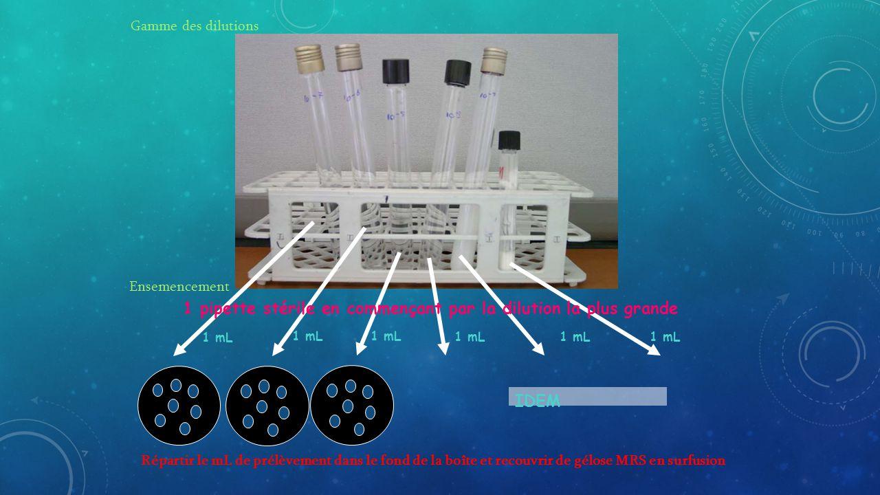 Ensemencement 1 mL Répartir le mL de prélèvement dans le fond de la boîte et recouvrir de gélose MRS en surfusion 1 mL 1 mL 1 mL 1 mL 1 mL IDEM Gamme des dilutions 1 pipette stérile en commençant par la dilution la plus grande