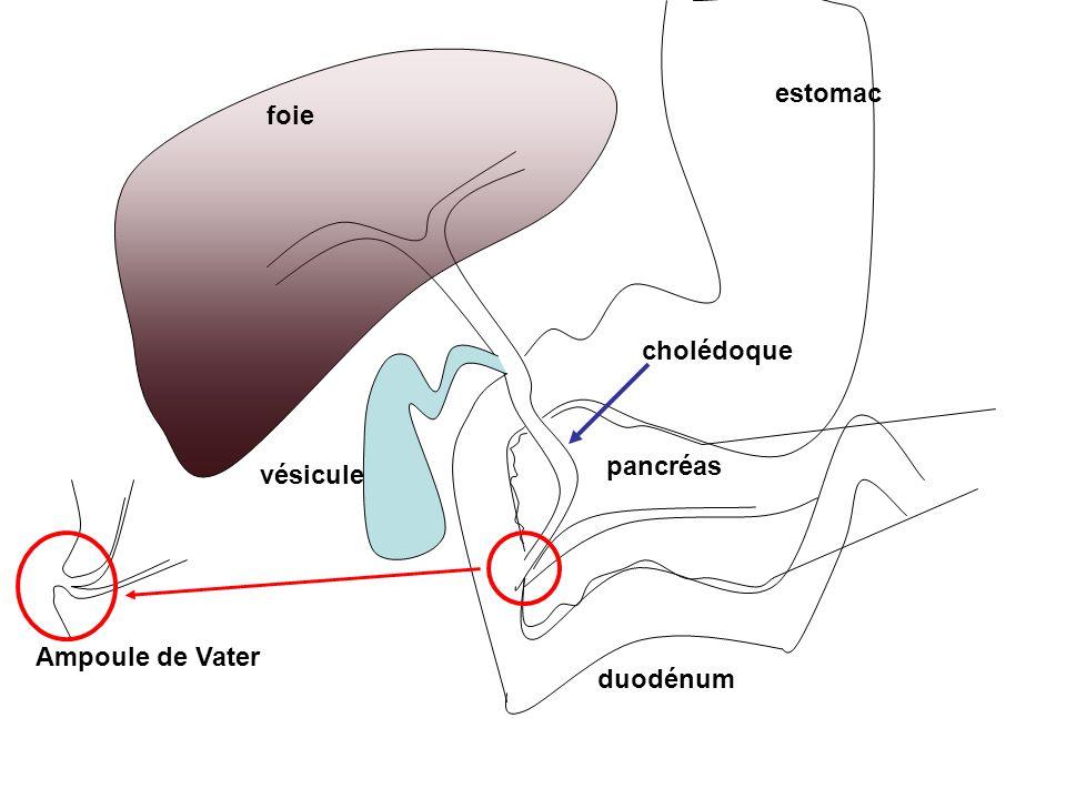 foie vésicule cholédoque pancréas duodénum estomac Ampoule de Vater