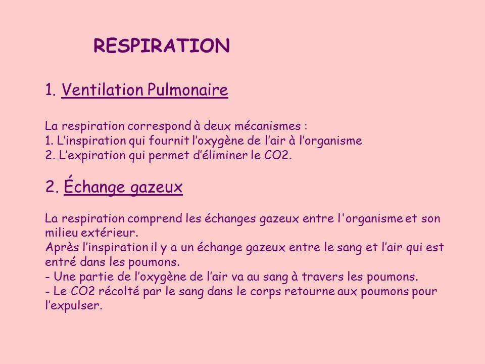 RESPIRATION 1.Ventilation Pulmonaire La respiration correspond à deux mécanismes : 1.