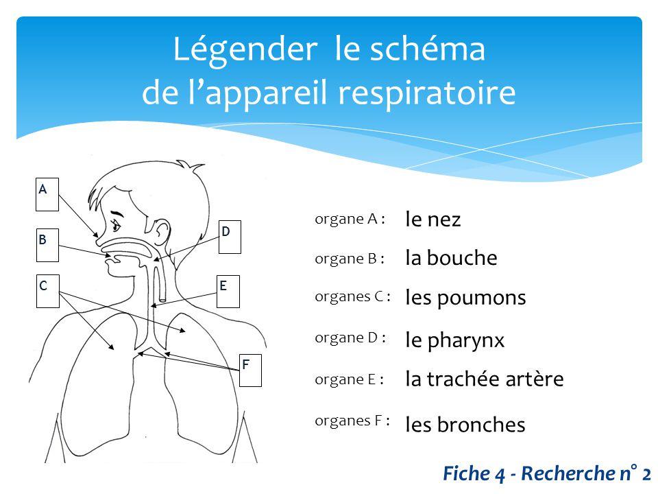 Légender le schéma de l'appareil respiratoire A B D C E F organe A : organe B : organes C : organe D : organe E : organes F : le nez la bouche les pou
