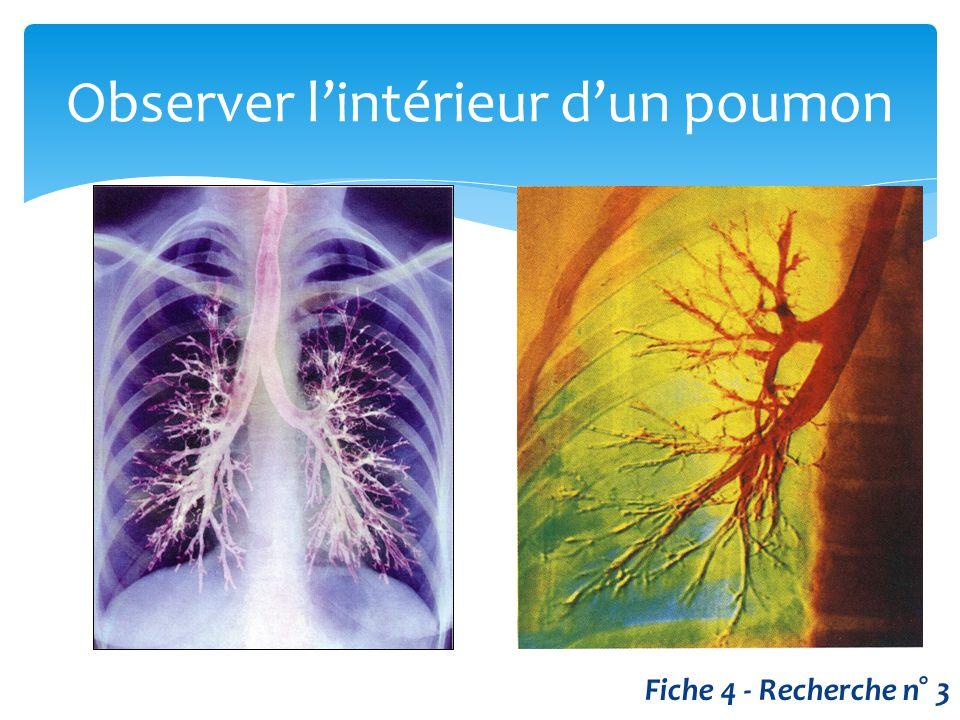 Observer l'intérieur d'un poumon Fiche 4 - Recherche n° 3