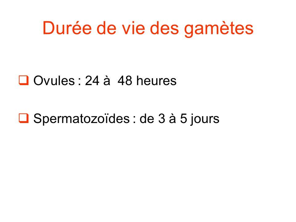 Durée de vie des gamètes  Ovules : 24 à 48 heures  Spermatozoïdes : de 3 à 5 jours