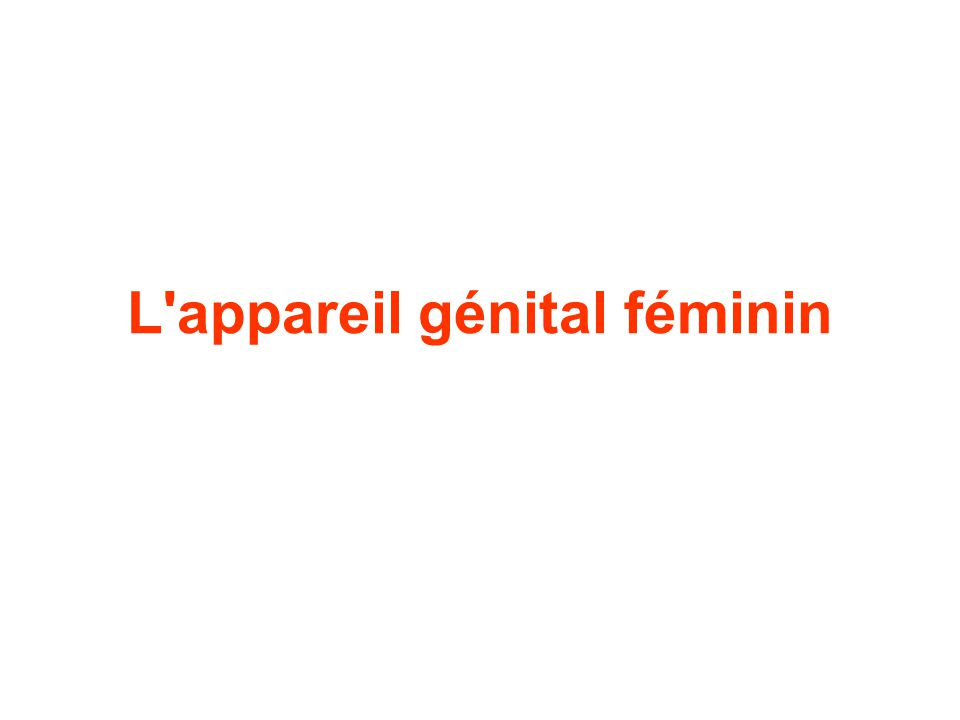 L appareil génital féminin