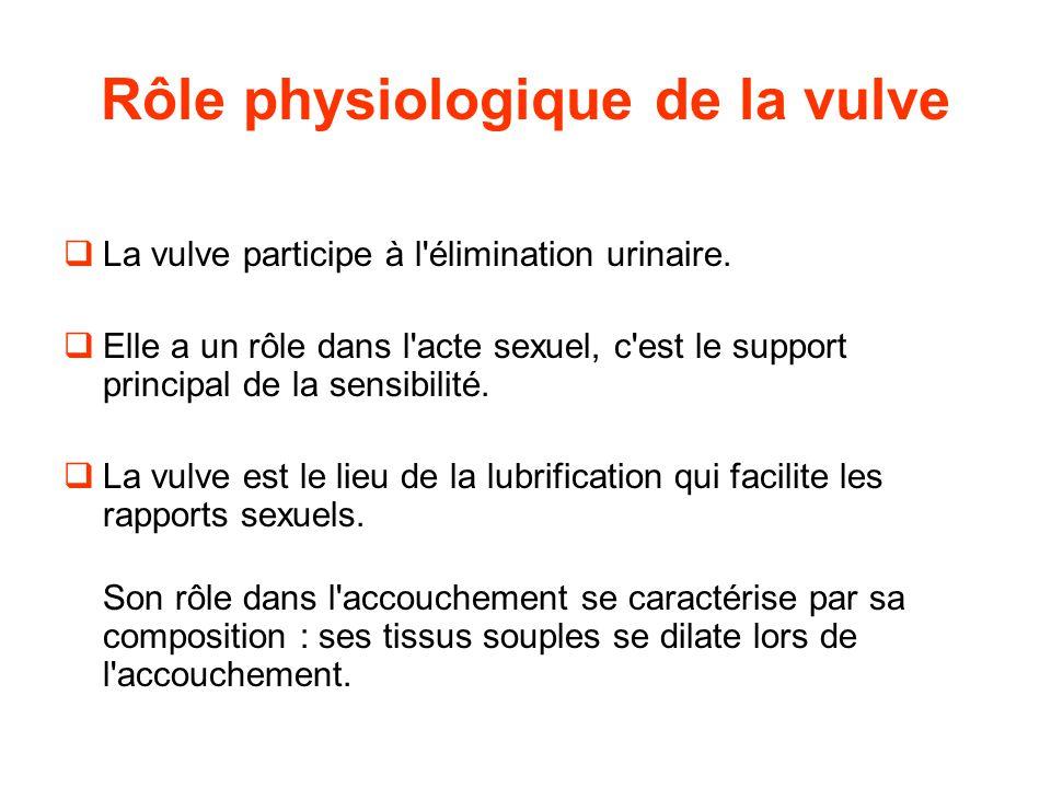 Rôle physiologique de la vulve  La vulve participe à l élimination urinaire.