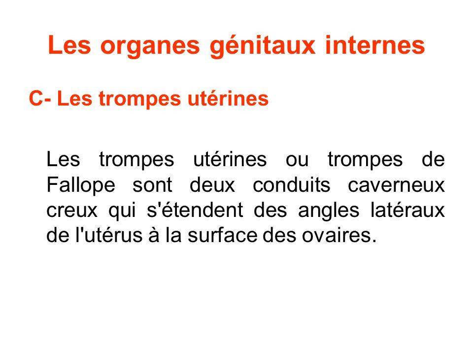 Les organes génitaux internes C- Les trompes utérines Les trompes utérines ou trompes de Fallope sont deux conduits caverneux creux qui s étendent des angles latéraux de l utérus à la surface des ovaires.