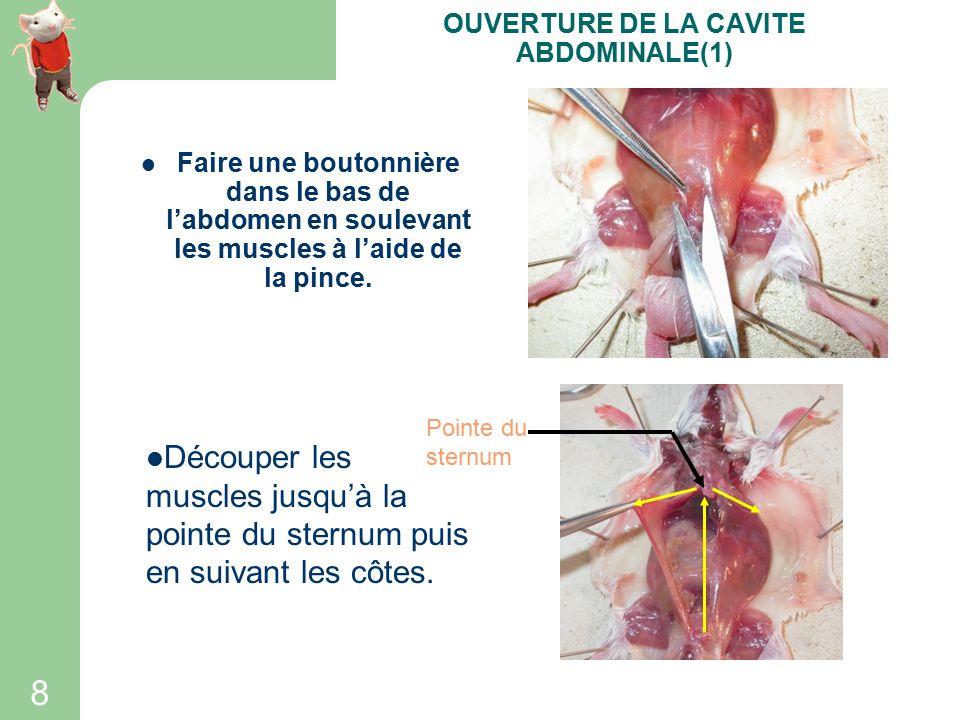 7 Décoller la peau entre les membres postérieurs. ENLEVER LA PEAU(4)