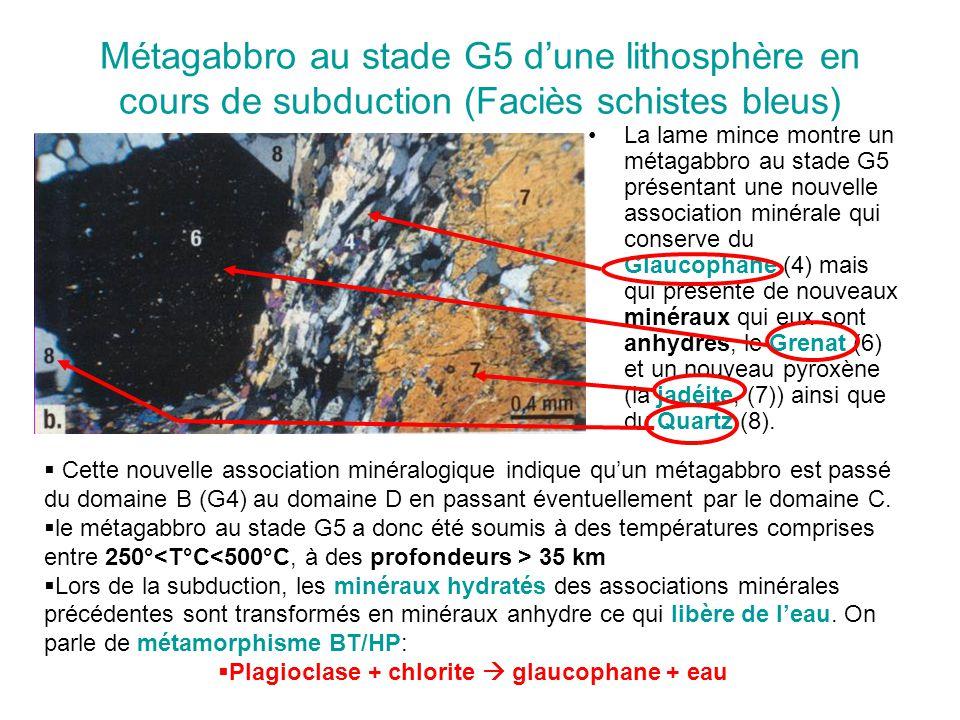 Métagabbro au stade G5 d'une lithosphère en cours de subduction (Faciès schistes bleus) La lame mince montre un métagabbro au stade G5 présentant une nouvelle association minérale qui conserve du Glaucophane (4) mais qui présente de nouveaux minéraux qui eux sont anhydres, le Grenat (6) et un nouveau pyroxène (la jadéite, (7)) ainsi que du Quartz (8).