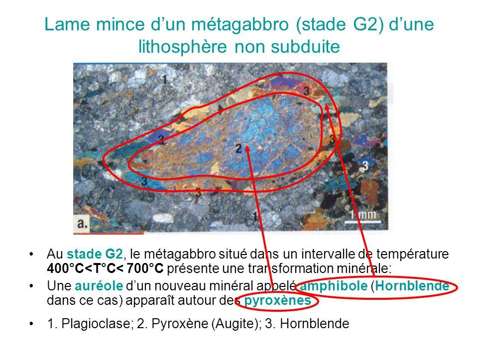 Lame mince d'un métagabbro (stade G2) d'une lithosphère non subduite Au stade G2, le métagabbro situé dans un intervalle de température 400°C<T°C< 700°C présente une transformation minérale: Une auréole d'un nouveau minéral appelé amphibole (Hornblende dans ce cas) apparaît autour des pyroxènes 1.