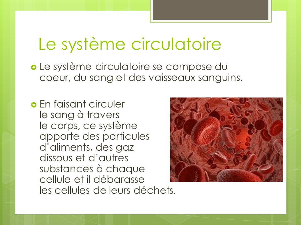  Le système circulatoire se compose du coeur, du sang et des vaisseaux sanguins.  En faisant circuler le sang à travers le corps, ce système apporte