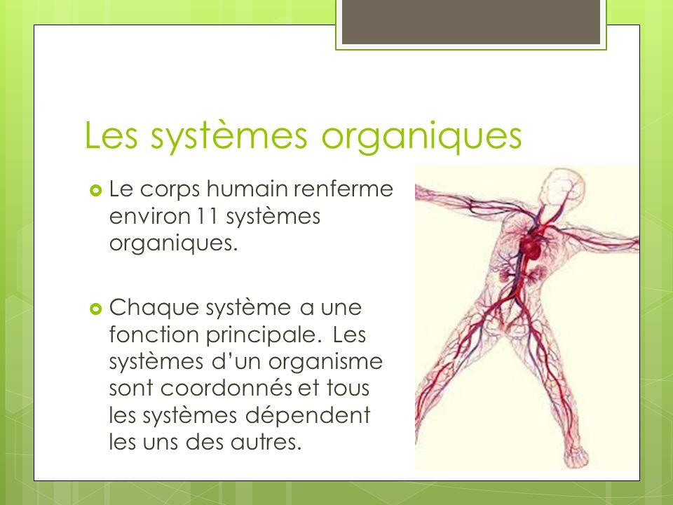 Les systèmes organiques  Le corps humain renferme environ 11 systèmes organiques.  Chaque système a une fonction principale. Les systèmes d'un organ