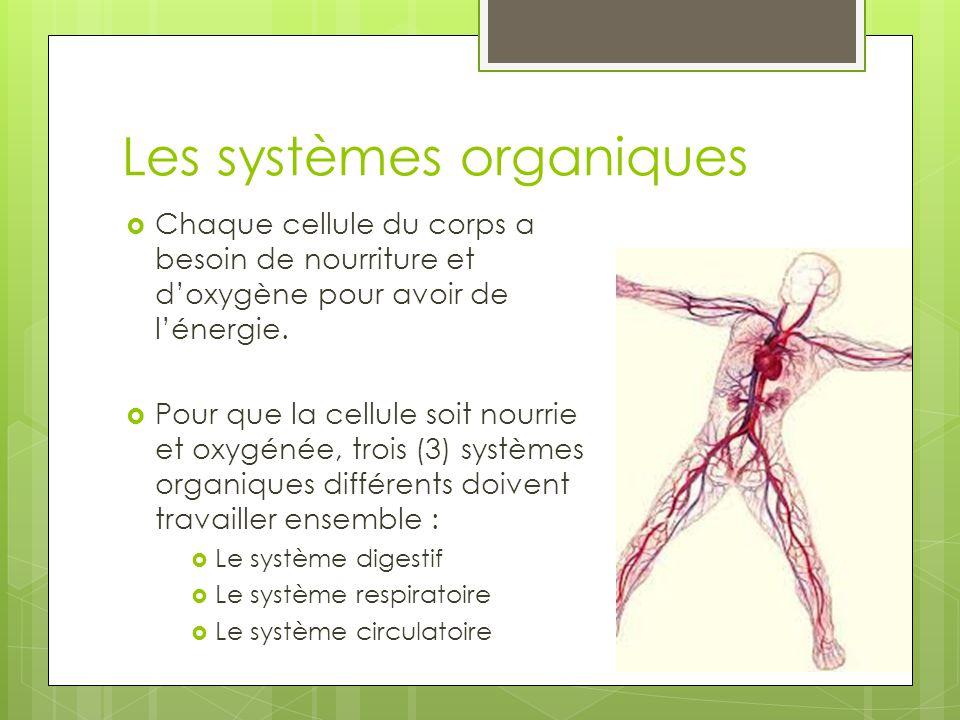 Les systèmes organiques  Chaque cellule du corps a besoin de nourriture et d'oxygène pour avoir de l'énergie.  Pour que la cellule soit nourrie et o
