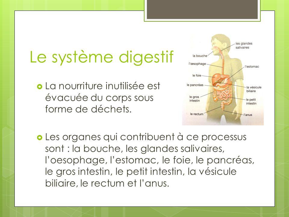 Le système digestif  La nourriture inutilisée est évacuée du corps sous forme de déchets.  Les organes qui contribuent à ce processus sont : la bouc